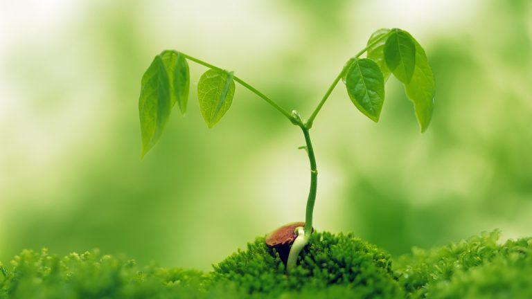 Экология, охрана природы, экологическая безопасность